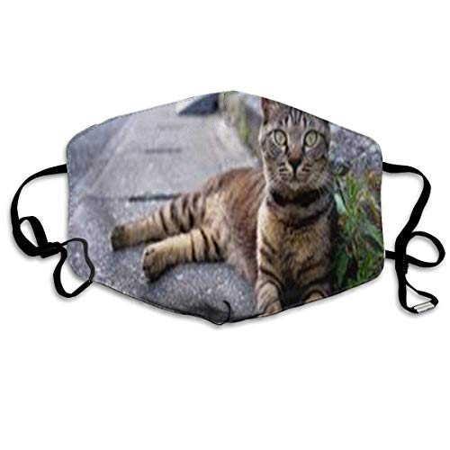 Desing shop Gray Striped Cat Non-Toxic Dust & Filter Safety Masks