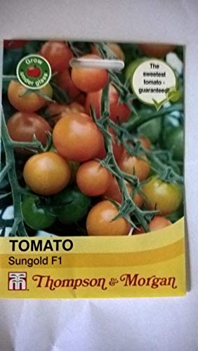 Portal Cool Samen Obst T & M Tomate Sungold F1 Hybrid Seed RRP £ 3.69 (Sungold Tomaten Samen)