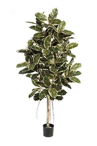 artplants – Künstlicher Gummibaum Devi, 174 Blätter, weiß-gelb-grün, 180 cm – Kunstbaum/Deko Baum