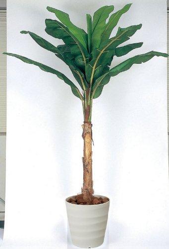 光触媒観葉植物 バナナ 2.0 フロアタイプ ハイサイズ 風景専門店のあゆわら