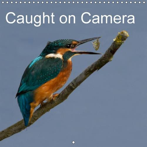 Caught on Camera (Wall Calendar 2016 300 × 300 mm Square): Bird Photography, Split Second Timing (Monthly calendar, 14 pages) (Calvendo Nature)