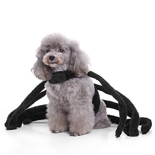 Danny Queen Halloween Haustiere Kostüme Hundekleider Schön Party Festival Kostüme Verrücktes Kleid Hunde-Outfits Spinne/Kürbis/Zauberer/Würstchen/Hieb (S, - Verrückter Hunde Kostüm