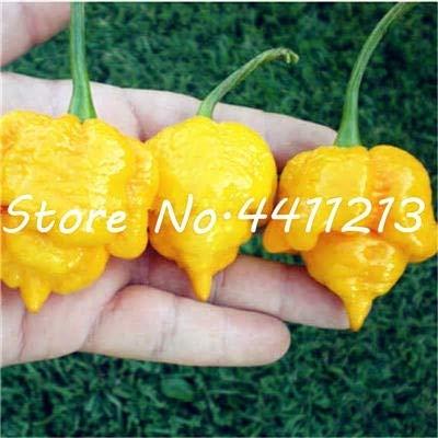 Chili Samen Gemüse Frische Samen, multi farbe Gemüsepflanze in gelb ()