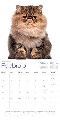 Zoom IMG-2 gatti calendario 2020 da muro