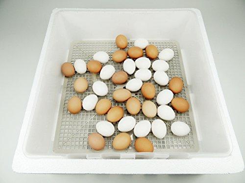 Campo24 S60 Motorbrüter autom. Wendung Brutapparat, Inkubator, für bis zu 60 Eier Inkubator - 5