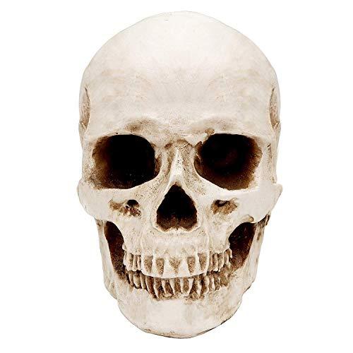 Cráneo Humano - Calavera de Resina para Anatomía Enseñanza...