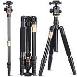 Kompaktes leichtes Reise-Portable Kamera tragbare Stativ Aluminiumlegierung Stativ-Kugelkopf und Ersatz 1/4