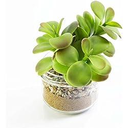 artplants Künstliche Dickblatt im Glas, grün, 12 cm, Ø 9 cm - Künstlicher Kaktus/Mini Kunstpflanze