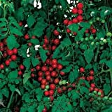 Tomate -Sweetie- 10 Samen