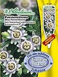 Passionsblume (Portion inkl. Stecketikett)