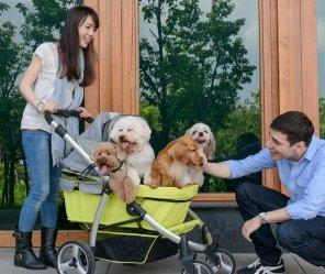 Haustier-Buggy, ips-06/grün, Hunde-Tragetasche, Trolley, Trailer, InnoPet®, Buggy Retro. Zusammenklappbar Pet Buggy, Kinderwagen, Kinderwagen für Hunde und Katzen -