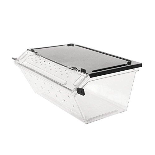 Welltobuy Transparent box rettile allevamento insetti vivi contenitore in plastica per alimenti Feeding box Snake Spider Lizard Scorpion
