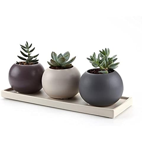 t4u 7,5cm, cerámica Cameo Howllow de doble capa diseño sucuulent Maceta/Cactus Maceta con platillo Purle Paquete 1pack de 3