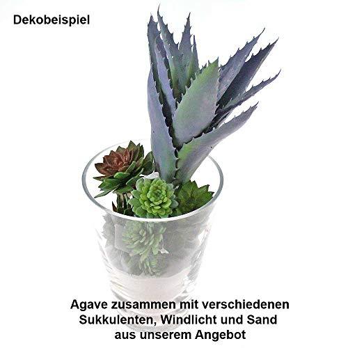Floral-Direkt Agave H25cm Kunstblume Kunstpflanze künstlich grün