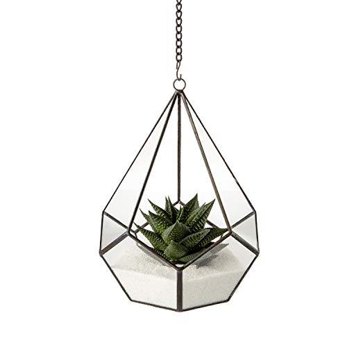 Ultra 17.5x17.5x22cm Teardrop Style Clear Glass Terrarium Planters Geometrische Form Für die Vermähungen Einzigartig Zentrum oder Windowsills für Luftanlagen Fern Moss Succulents Indoor Garden (Terrarium Kit Medium)