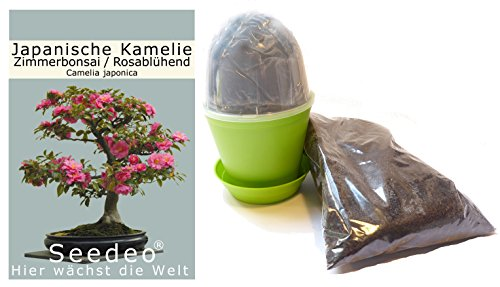 Seedeo Bonsai Anzuchtset Japanische Kamelie (Camellia japonica)