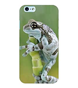 ColourCraft Funny Frog Design Back Case Cover for APPLE IPHONE 6