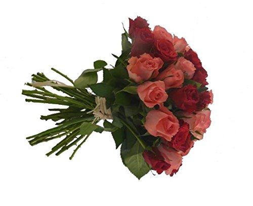 Roses Divines