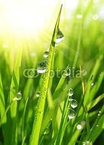 """Wandtapete-Bild 50 x 70 cm: """"Fresh grass with dew drops close up"""", Bild auf Wandtapete"""