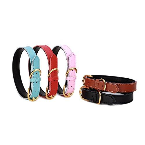 Petween Basic Classic Gepolsterte Leder Haustier Halsbänder für Katzen Welpen Kleine Medium Hunde (Lhasa Apso Kostüme)