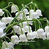 50pcs del lirio blanco de las semillas del valle Convallaria majalis perenne de flores del jardín de las semillas de flor de