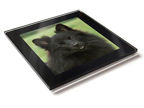 Deutscher Spitz mittel dunkel Hund Puppy Premium Glas Tisch Untersetzer mit Geschenk-Box