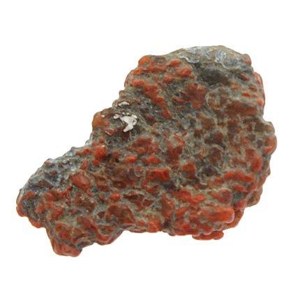 Dinosaures Fossiles - Bone fossile de