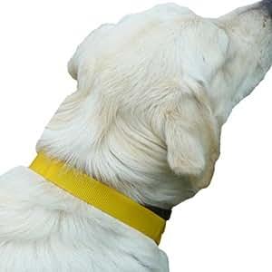 Collier magnetique pour chien- Epixen