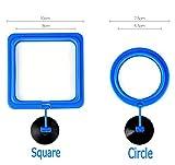 #8: Designeez plastic Decorations (Style: Blue & Size: S) #266