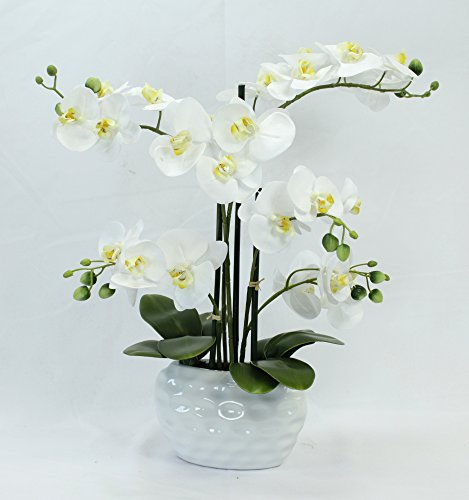 Kunstpflanze Orchidee XL mit Keramiktopf - ca. 53cm hoch (Blüten weiß - Topf weiß)