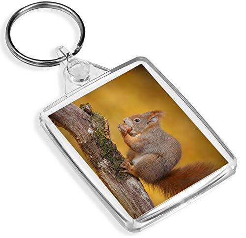 lanhänger Entzückende Rotes Eichhörnchen Schlüsselanhänger, Natur, Wilder Wald Cooler Schlüsselanhänger Gift # 14163 ()