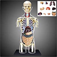 Human Torso Model for Medical Training, Human Body Half Body Internal Organs Anatomy Can Be Divided Into 37 Parts Medical Teaching Model, Puzzle Assembling Toy