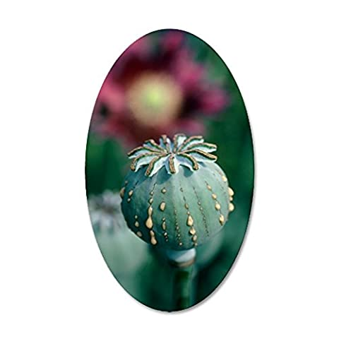 CafePress - Collecting Opium From Poppy - 35x21 Oval Wall Decal, Vinyl Wall Peel, Reusable Wall