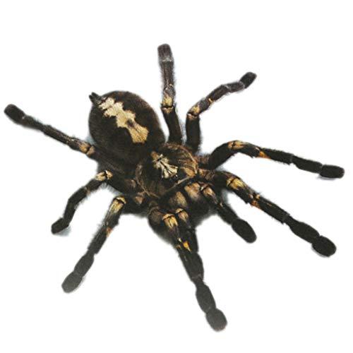 F-blue 1Pcs / 2Pcs 3D-Spinnen-Aufkleber Lustige Auto-Kopf-Schwanz-Personality-Spinne Aufkleber-Abziehbild-Dekor-DIY Dekoration