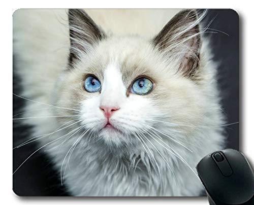 Mauspad, Blaue Augen Tierkatze Weiße Mausunterlage, Mauspad für -
