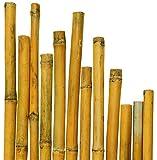 CANNE IN BAMBOO PER SOSTEGNO ORTAGGI E ALTRI USI DA CM 210 IN CONFEZIONE DA 25 CANNE