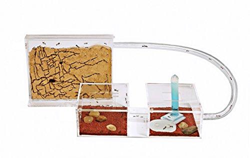 Fourmilière KIT Mini en SABLE avec les Fourmis et Reine GRATUITES