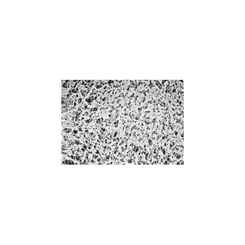 GVS Life Sciences 1222107Polypropylen-Membrane Festplatten, 0,45Mikron Porengröße, 25mm Durchmesser (100Stück) -
