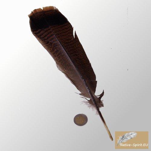 bronzene Truthahn Feder vom wilden Truthahn (wild turkey tail feather), mit natürlicher hübscher schwarz / braun Färbung direkt aus den USA (Größe 12'' / 29-32cm)
