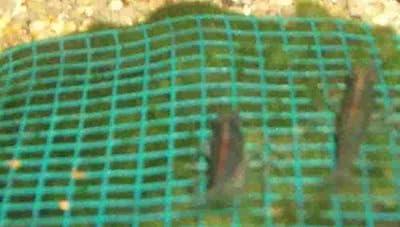 Wassergras Matte mit Gitter 15x10 cm, Moos von 436 bei Du und dein Garten