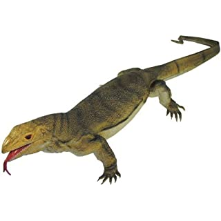 41 Inches Long 3-Lb Jumbo Monitor Lizard. by American Science & Surplus