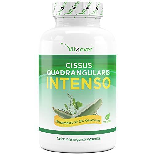 Vit4ever® Cissus Quadrangularis Intenso - 180 Kapsel - 725 mg Extrakt - 20% Ketosterone Anteil - Laborgeprüft - Mit Piperin optimiert - Hochdosiert - Vegan - Premium Qualität -
