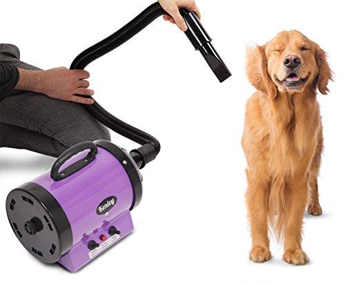 Kenley Secadora De Pelo Para Mascotas Caninas Calentadora - Calor y Velocidad Ajustable - Violeta Morado