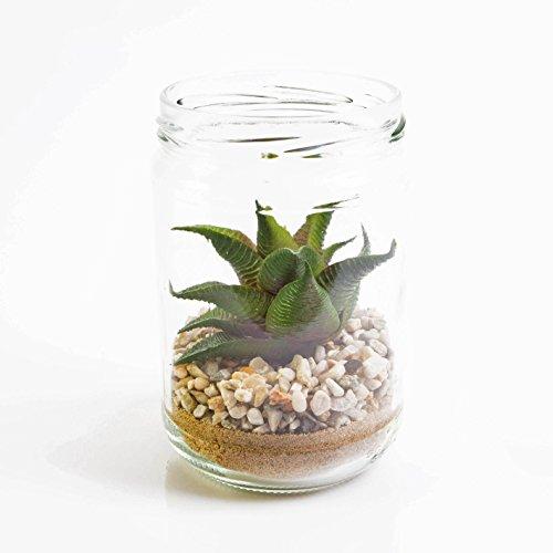 e Astroloba Spiralis im Glas, grün-rot, 13 cm, Ø 8 cm - deko Sukkulente/Mini Kunstpflanze ()
