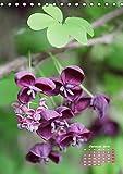Es rankt, klettert und blüht (Tischkalender 2019 DIN A5 hoch): Eine Auswahl besonderer Kletterpflanzen für Ihren Garten (Monatskalender, 14 Seiten ) (CALVENDO Natur)