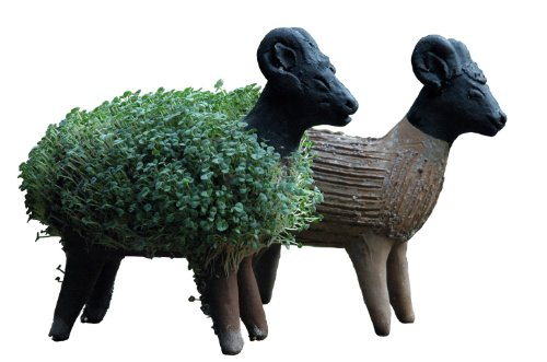 grow-your-own-sheep-cress-figure-including-cress-seeds-fair-trade-from-mexico