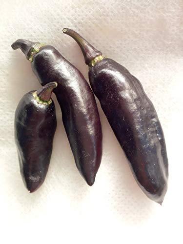 Semi di peperoncino Pimenta da Neyde