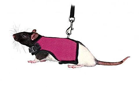 Qtmy Soft Harnais avec laisse pour petits animaux hamsters Chats