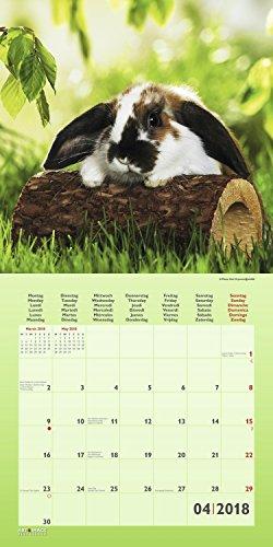 Kaninchen 2018 – Tierkalender, Kaninchen-Kalender, Hasenkalender, Haustierkalender  –  30 x 30 cm - 5