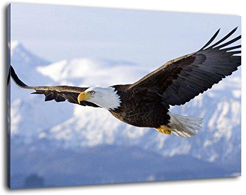 Adler fliegt über Schneebedeckte Berge, Leinwand Bild, Format:80x60 cm, Bild auf Leinwand bespannt, riesige XXL Bilder komplett und fertig gerahmt mit Keilrahmen, Kunstdruck auf Wand Bild mit Rahmen, günstiger als Gemälde oder Bild, kein Poster oder Plakat (Adler Bilder)